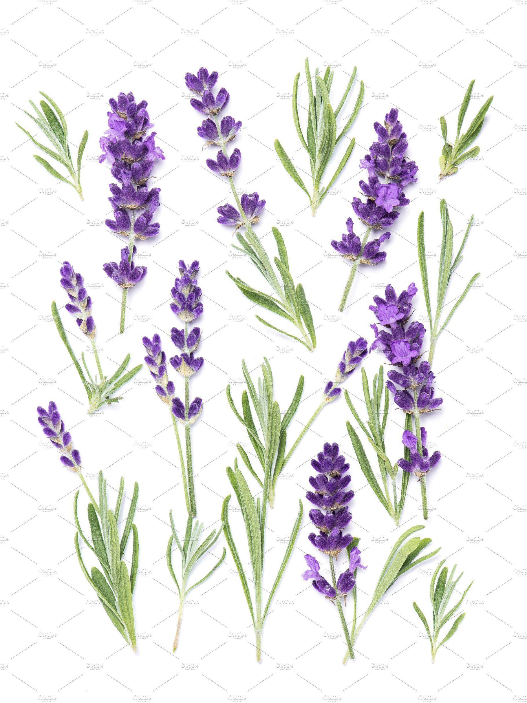 Lavender Flower Herb Background In 2020 Lavender Flowers Flower Pictures Flowers