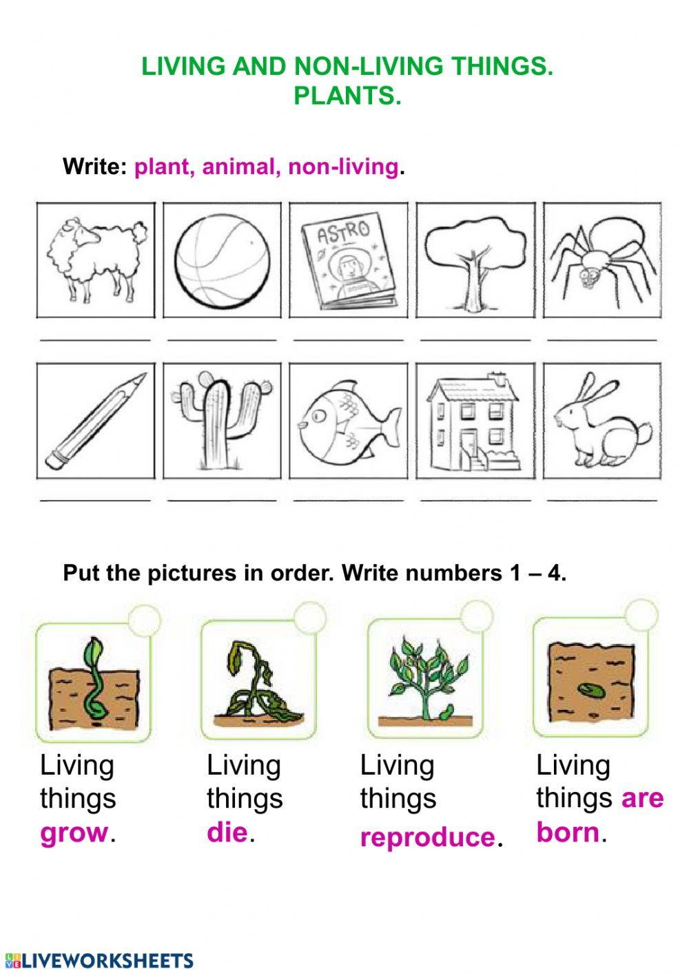 Living Things And Plants Interactive Worksheet Worksheets 2nd Grade Worksheets Plants Worksheets