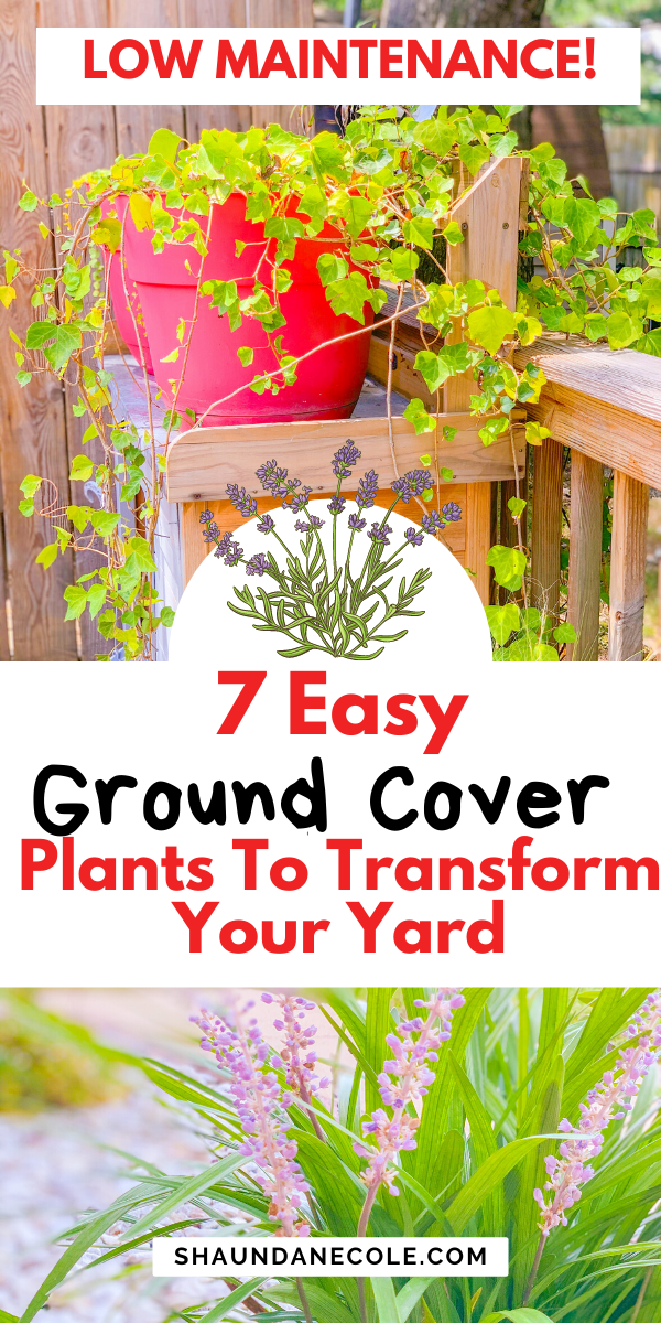 Garden Curb Appeal 7 Best Ground Cover Plants Ideas For Full Sun Or Shade Garden Areas Best Ground Cover Plants Ground Cover Plants Ground Cover