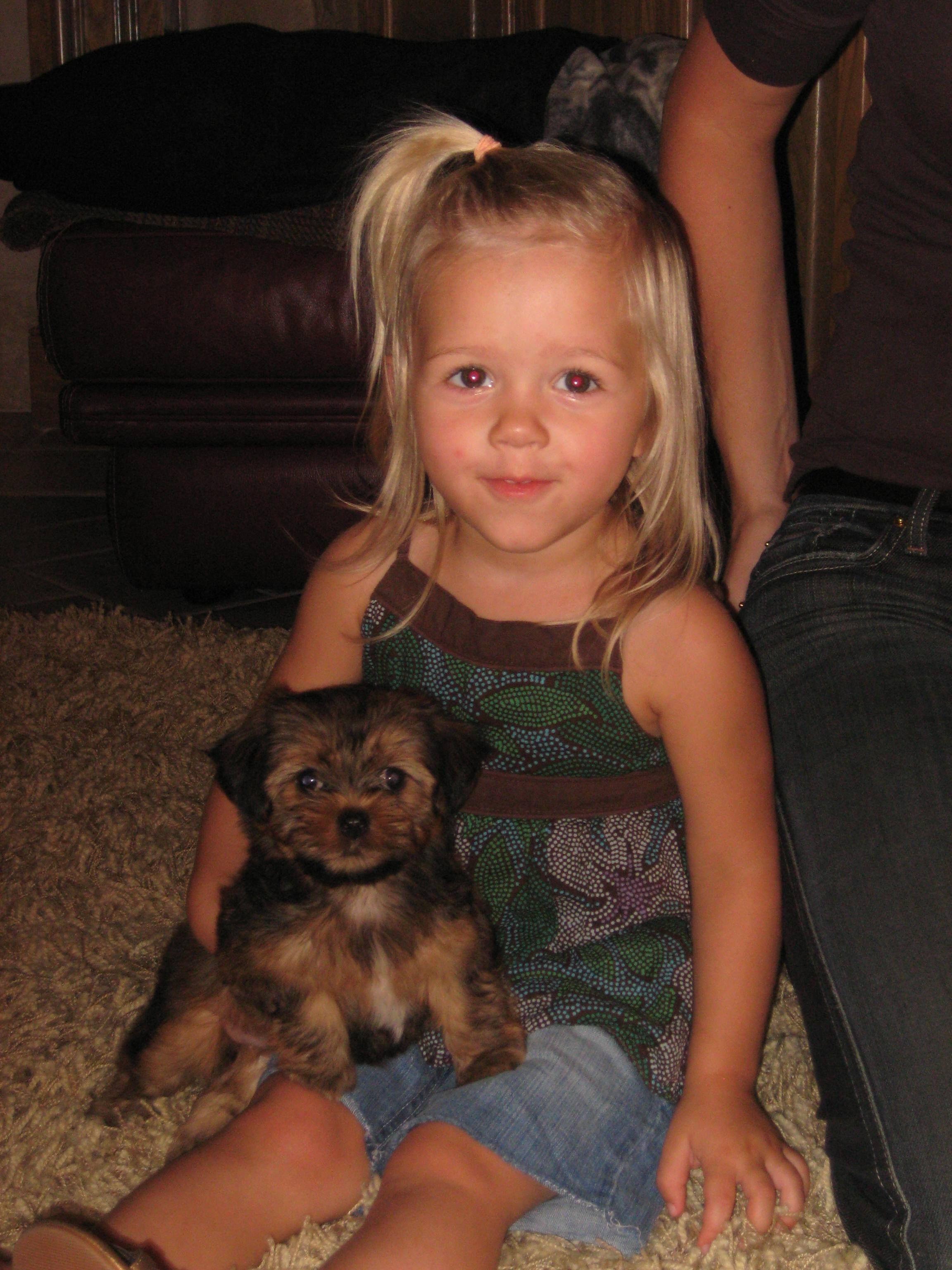 Pet News 2014 Pets Partners Yorkie Poo Shorkie Puppies Pet News