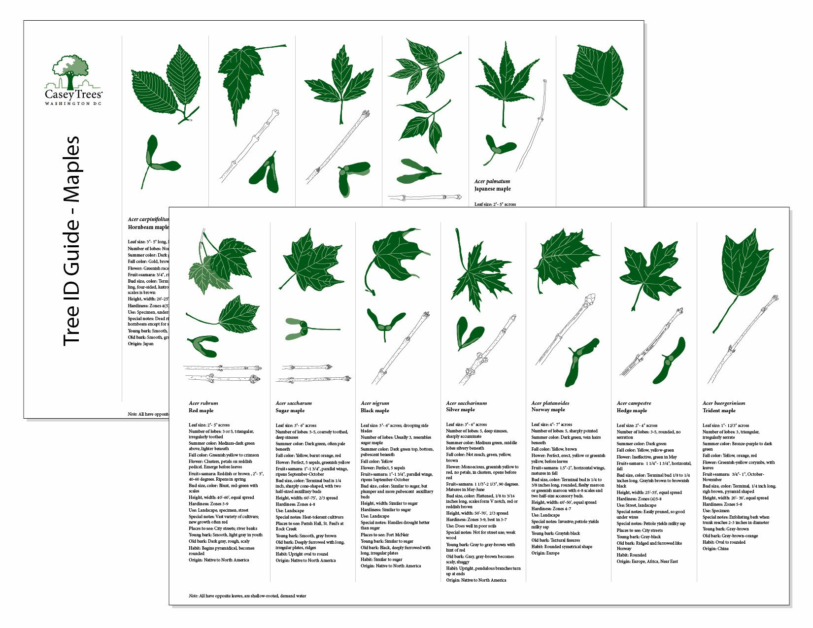 Tree Bark Identification Chart