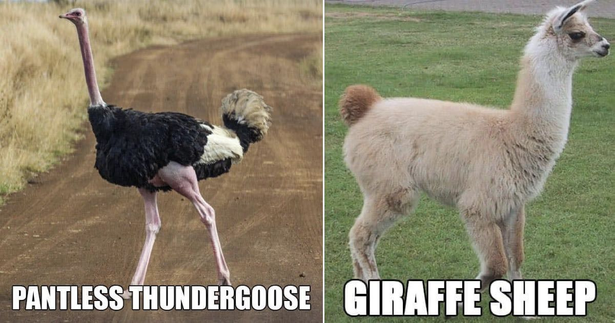 Pin by Justin Marshall on Funnies ( Animals, Dog breeds