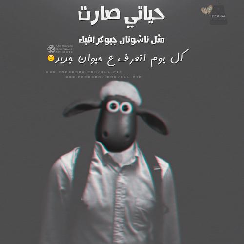 صور مضحكة اجمل الصور المضحكة مع التعليق مكتوب عليها مسخرة مواقف مضحكة للبنات اقوي الصور المضحكة فى العالم Funny Arabic Quotes Funny Pictures Funny Jokes