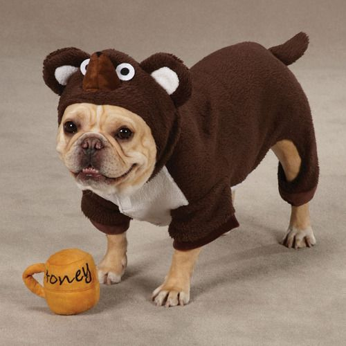 Theirs A Zoo Of Dogs Dressed Up As Other Animals Dog Halloween Dog Halloween Costumes Pet Halloween Costumes