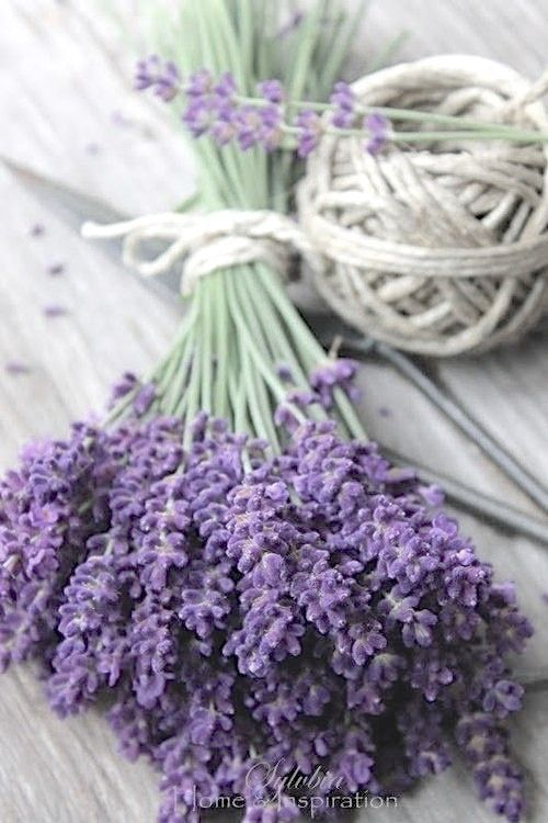 ♔ Lavender Love... A little sent of Provence for the cottage!