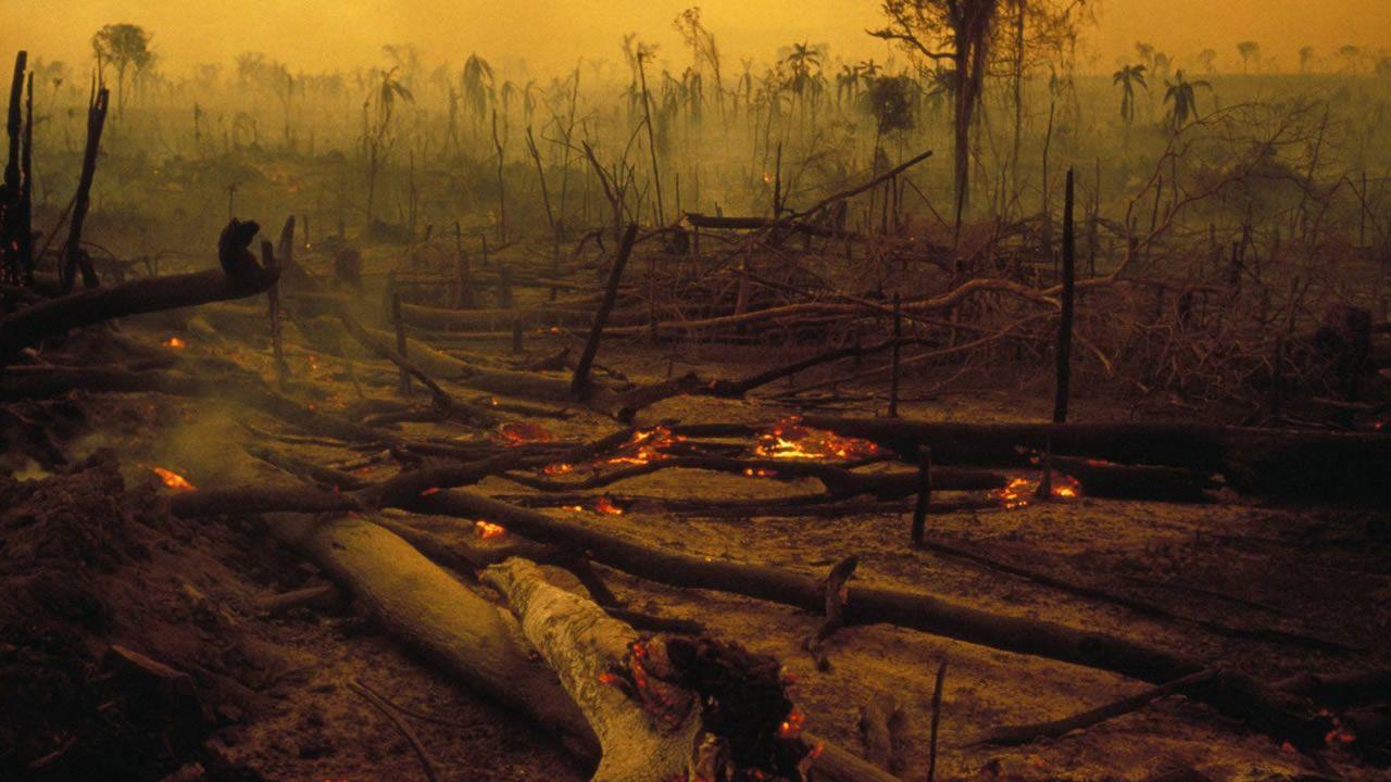 Pin De Susana En Dios En 2020 Cambio Climatico Deforestacion Climatico
