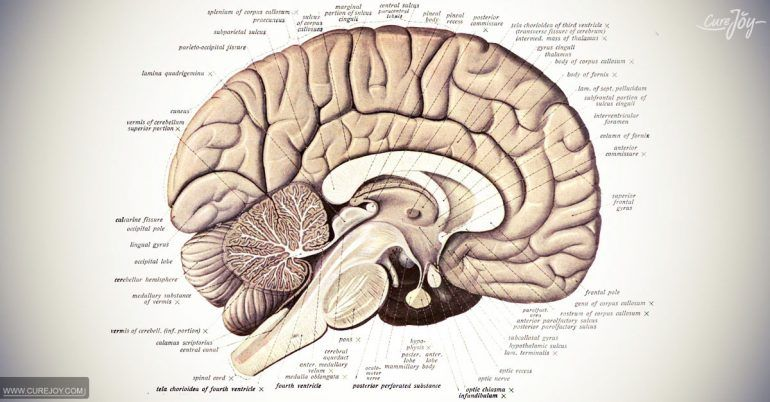 5 Tips To Recharge Your Memory Cells | Brain structure ...