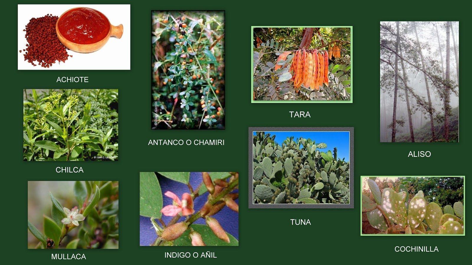 Animales y plantas de per plantas tintoreas pinterest for Plantas ornamentales del peru