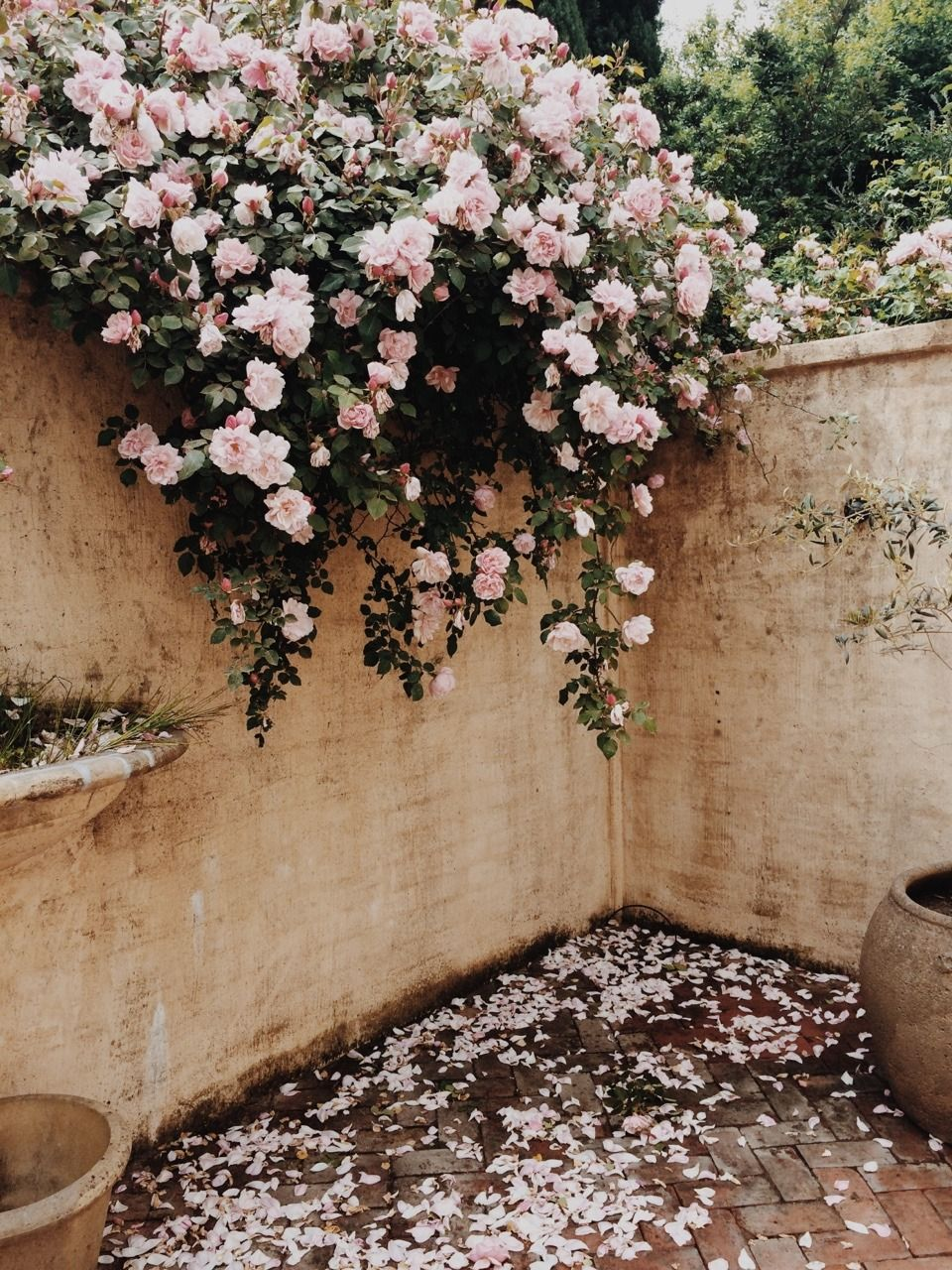 Pin by inna karenina on the south | Pinterest | Flowers, Gardens and ...
