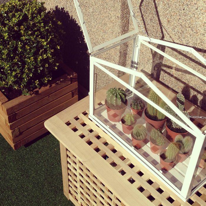 mini greenhouse ikea i like the idea of a cactus garden in it home love pinterest mini. Black Bedroom Furniture Sets. Home Design Ideas