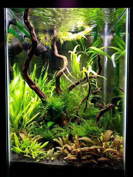 15g column low tech freshwater aquarium pinterest for Column fish tank