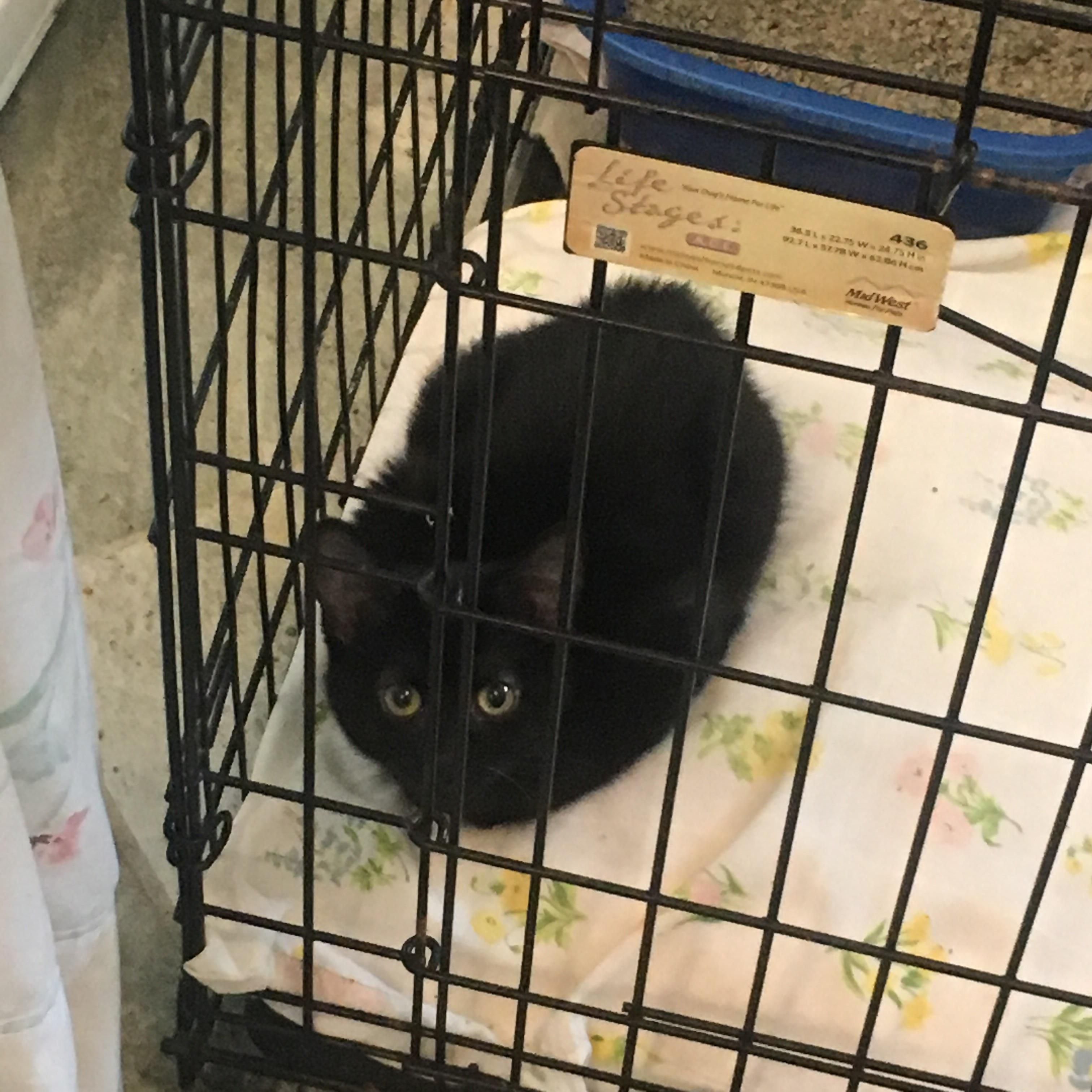 Look At This Lil Kitty Might Actually Be A Soot Sprite From The Shelter I Volunteer At Cat Shelter Cats And Kittens Cats