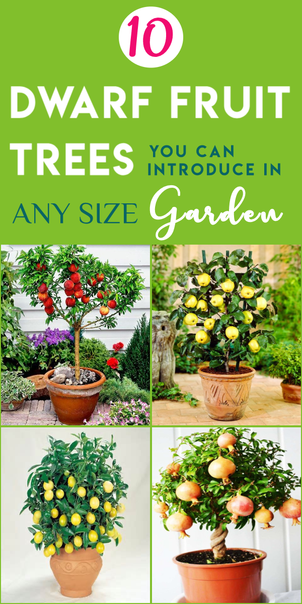 10 Dwarf Fruit Trees That You Can Grow In Pots Easily Dwarf Fruit Trees Fruit Tree Garden Container Gardening Vegetables