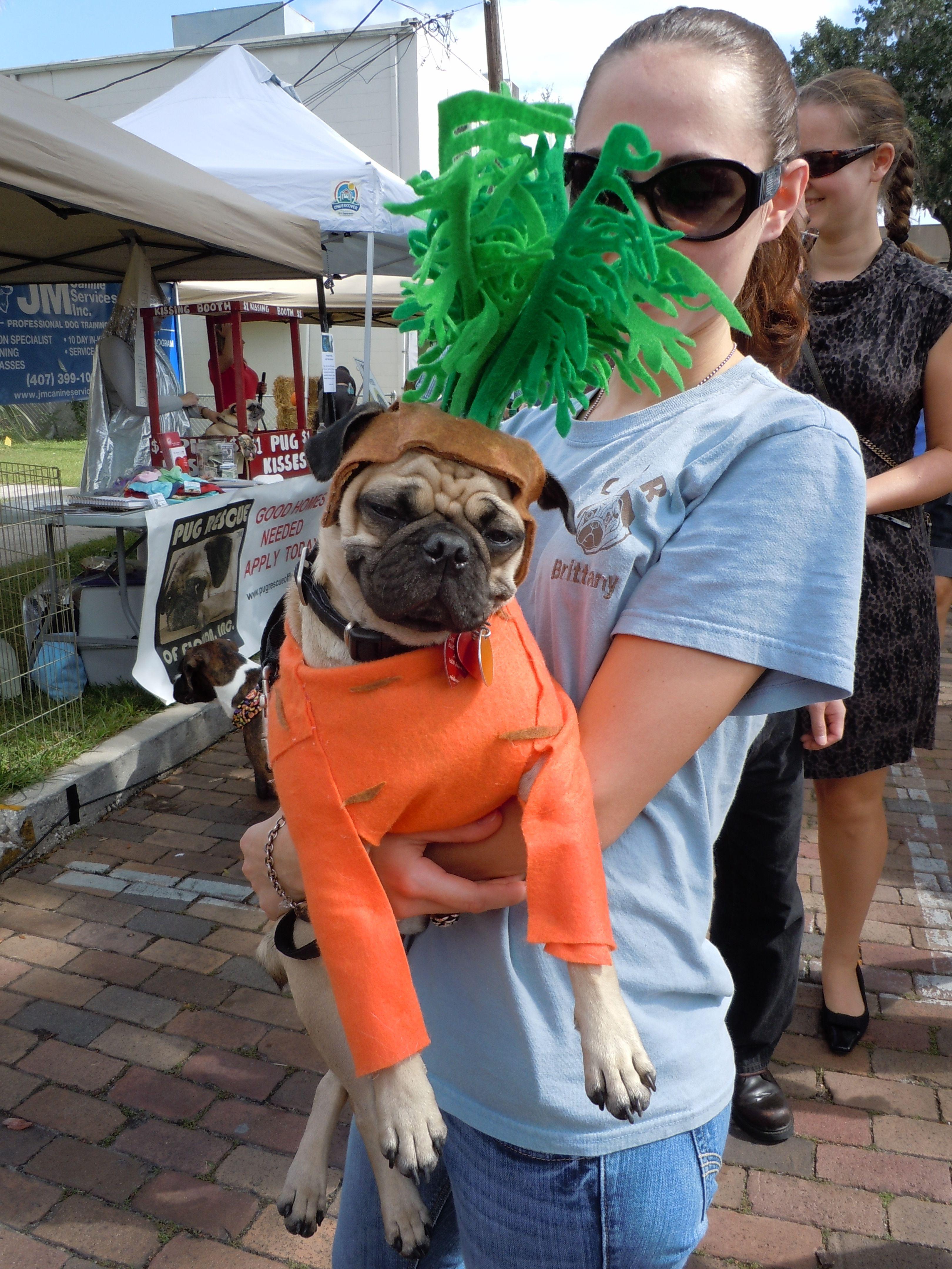 Doggie Costume Contest On Park Avenue Winter Park Florida