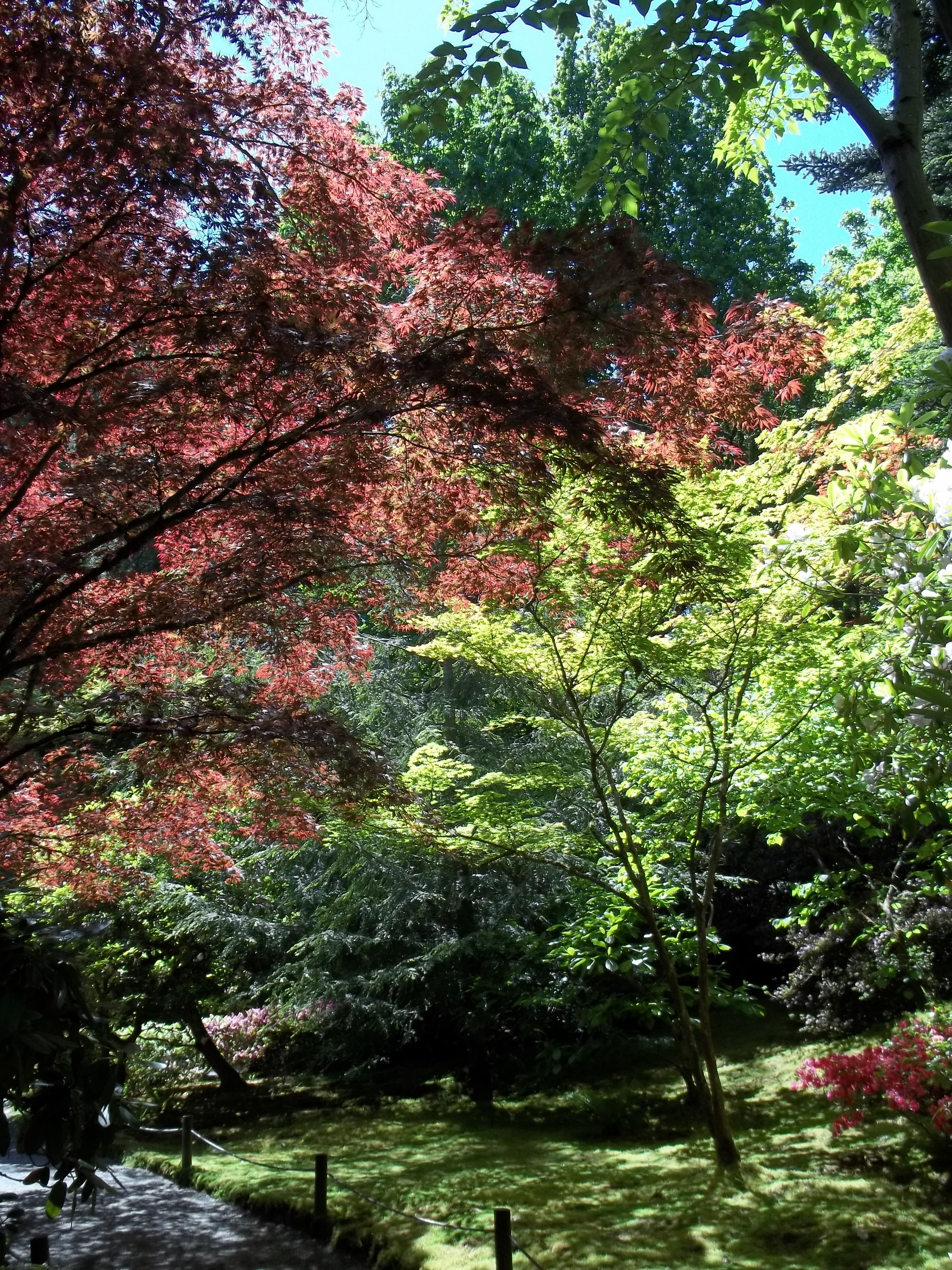 Seattle Botanical Gardens. Seattle, WA