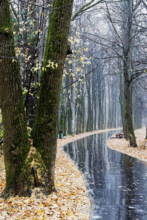 A Beautiful Rainy Day Love The Water S Reflection On The Walkway 5 Tumblr Scenery Landscape Walking In The Rain