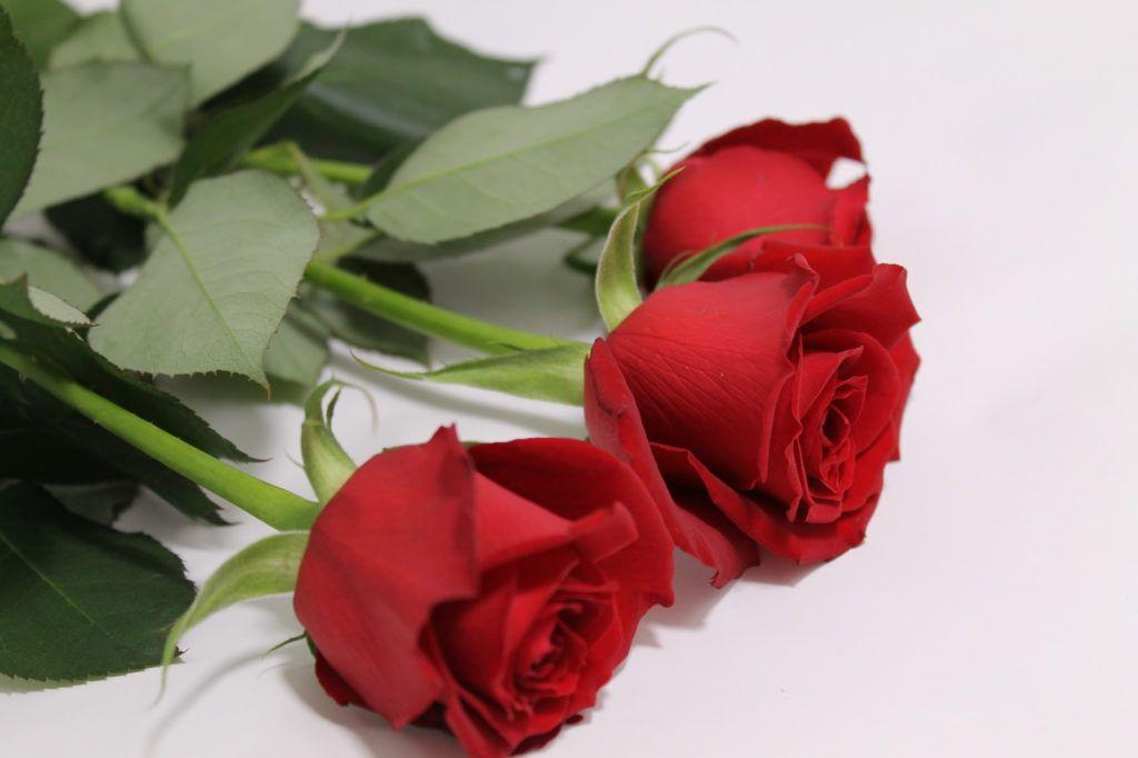花束として赤い薔薇3本を用意 無料 フリー写真素材 Activephotostyle 赤い薔薇 花束 ウェディングブーケ
