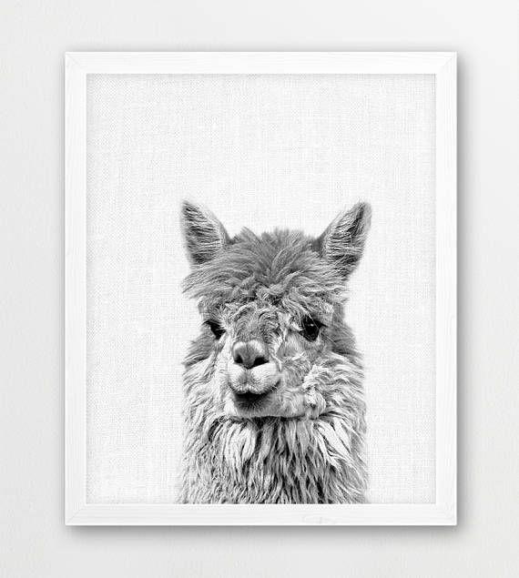 Llama print alpaca lama photo cute animals black white photography animal print baby shower nursery gift