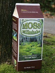Amazon Com Bonsai Moss Milkshake Patio Lawn Garden Growing