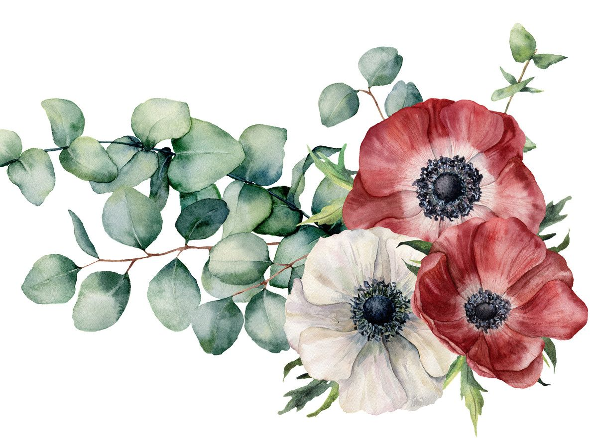 Anemones Anemone Flower Anemone Flower Art
