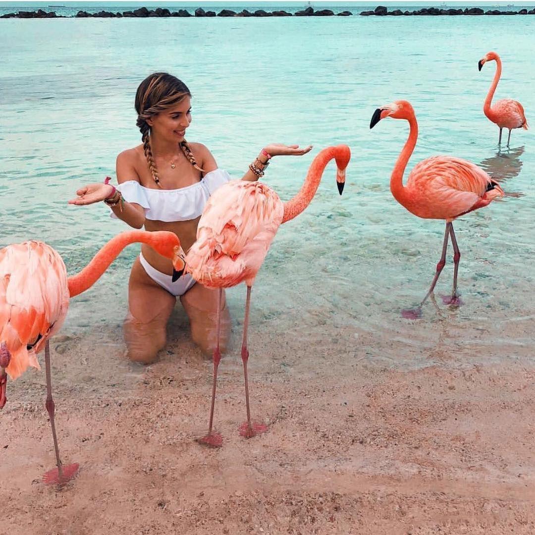 фламинго картинки и человек простой вариант исполнения