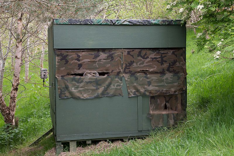 How To Build A Photography Hide Wildlife Photography Photography Hide