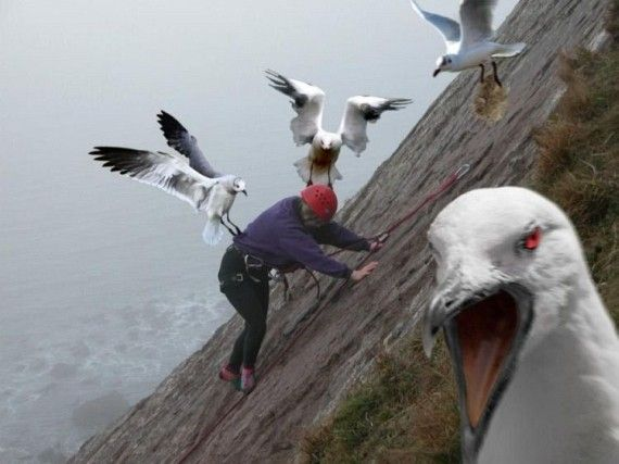 Angry birds in real life, but not really.