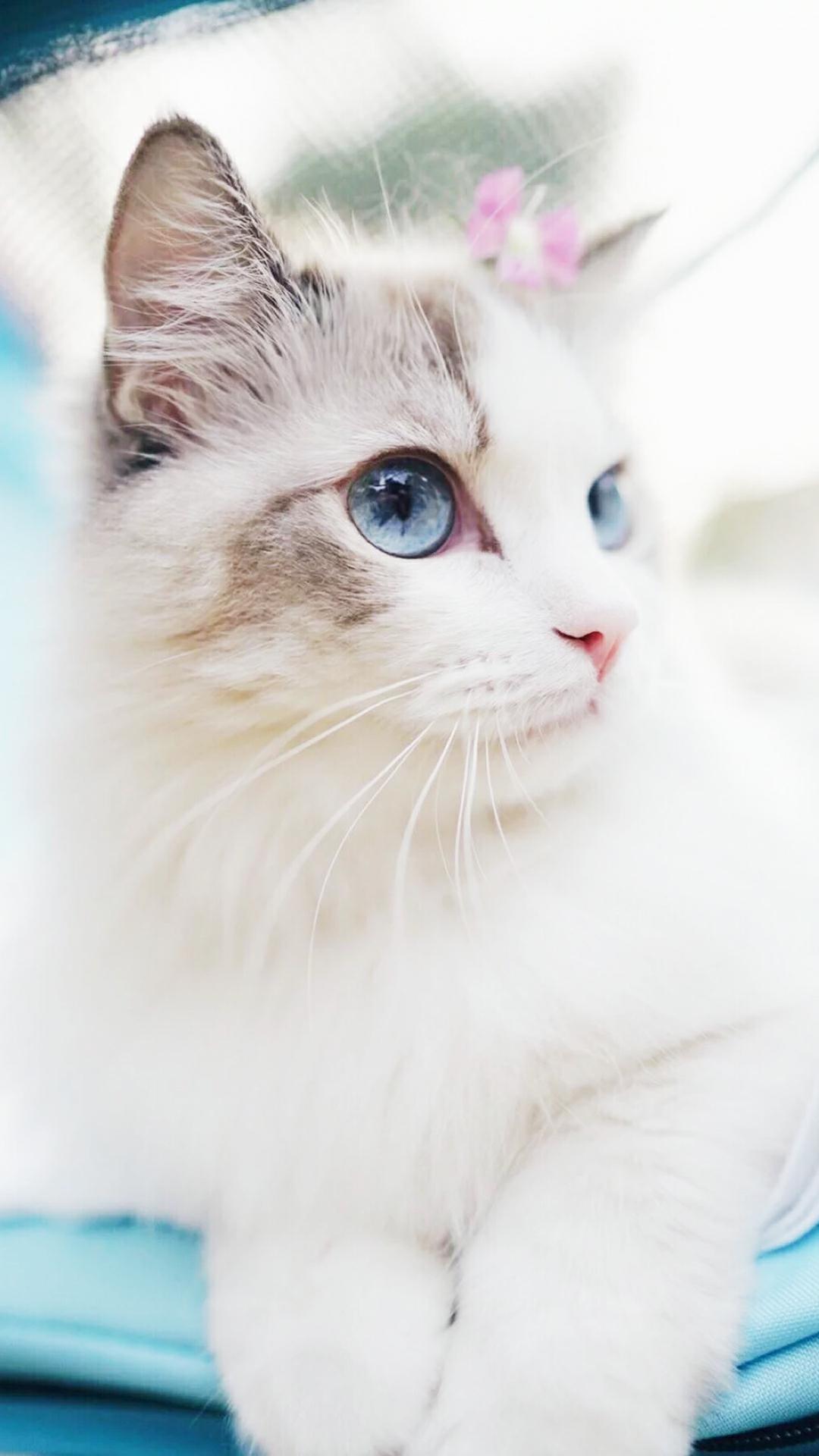 Beautiful Kitty Cutest Cats Wallpaper
