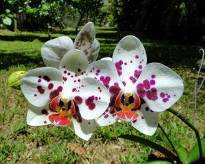 10 erreurs fréquentes du jardinier débutant | Orchidée ...