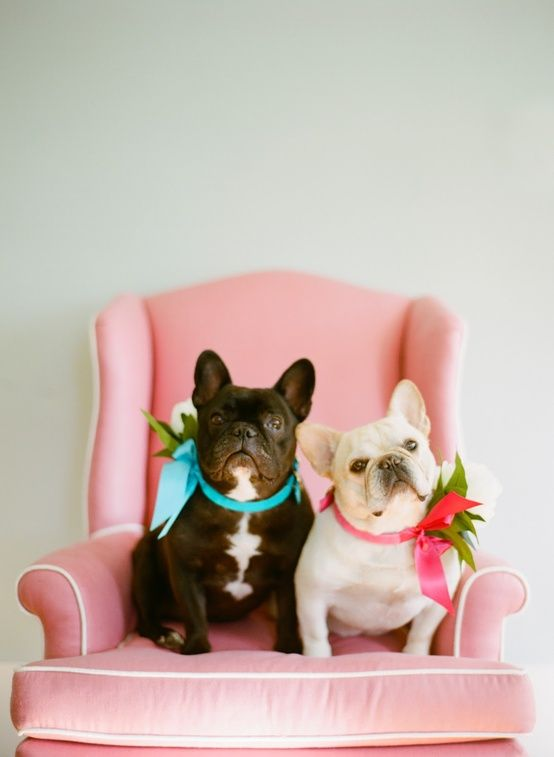 Pink chair and pups