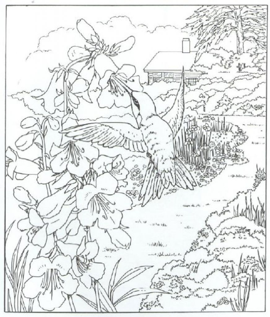 Very Detailed Realistic Hummingbird Coloring Page For Adults Letscolorit Com Bird Coloring Pages Animal Coloring Pages Coloring Pages Nature