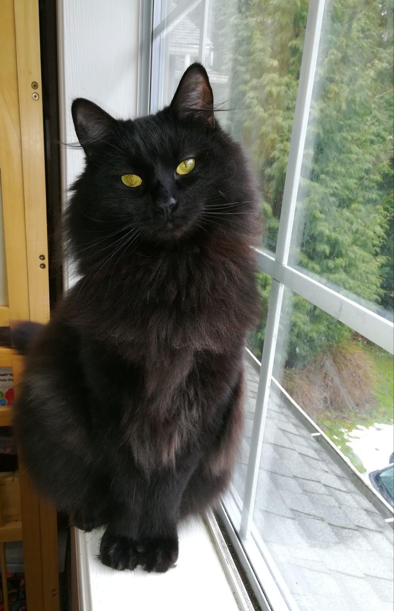 Kittens Baby Black Cat Black Baby Gorgeous Cats Black Cat Pretty Cats