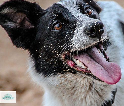 Della - The Wonder Dog!