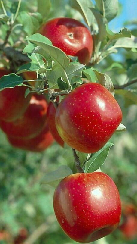 Pin By Aafreendesigner On Nature In 2020 Fruit