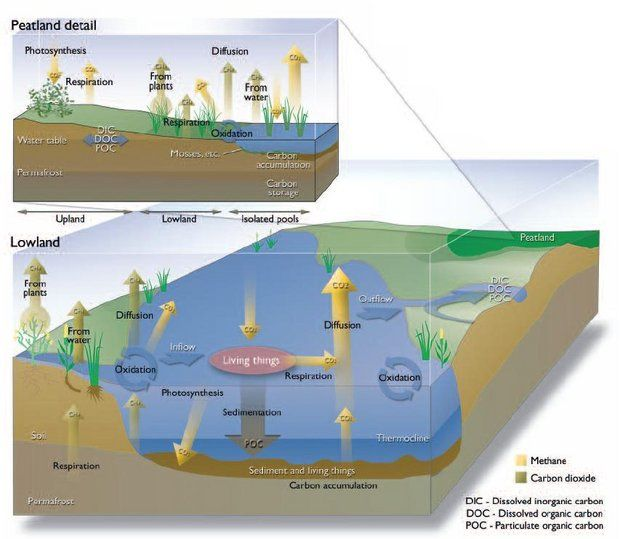 Aquatic and peatland aquatic carbon cycle science illustration aquatic and peatland aquatic carbon cycle ccuart Image collections
