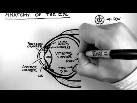 Anatomy Of The Eye Youtube Neuroscience Anatomy Pinterest