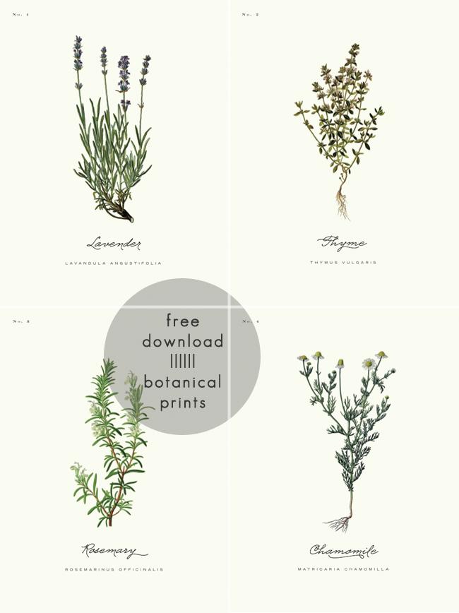 farmhouse style botanical prints round-up | home decor | pinterest ...