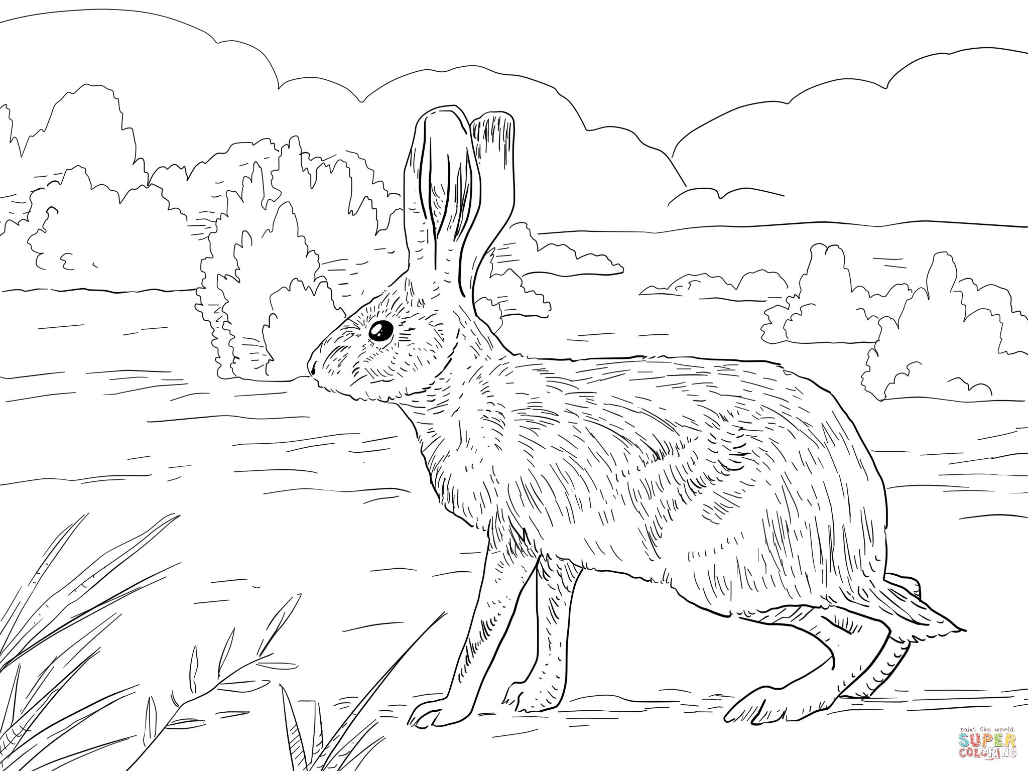 California Jack Rabbit Coloring Page Supercoloring Com Coloring Pages Bunny Coloring Pages Super Coloring Pages