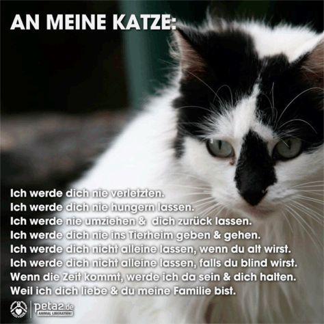 Katzenspruche Lustige Katzen Katzen Zitate Katzen