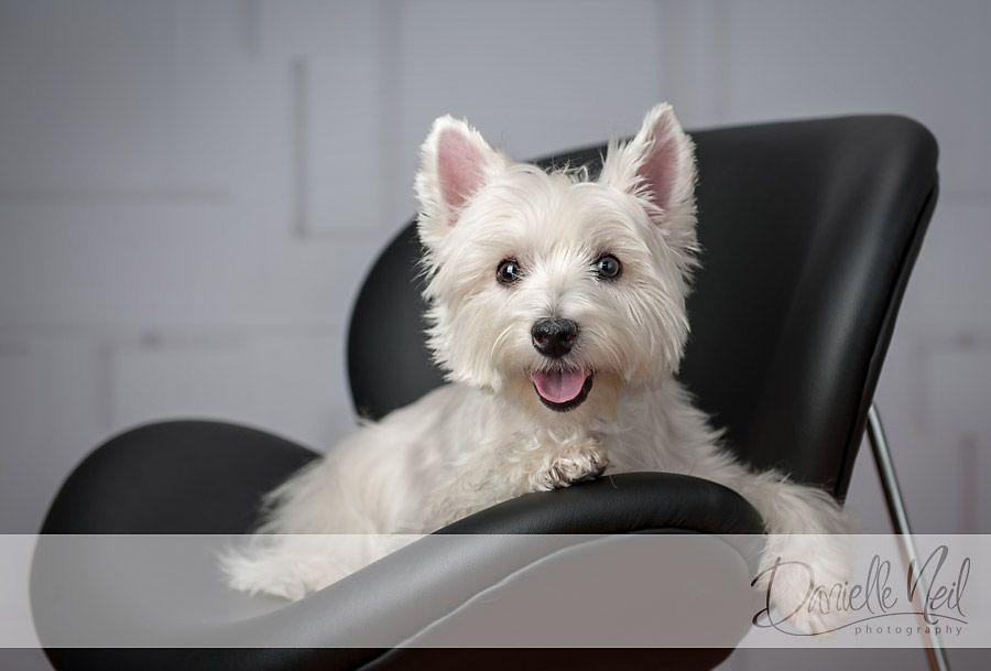 Wag Worthy Pet Portraits Northeast Ohio Dog Photography Westie Dogs Dog Photography Fun Dog Photos