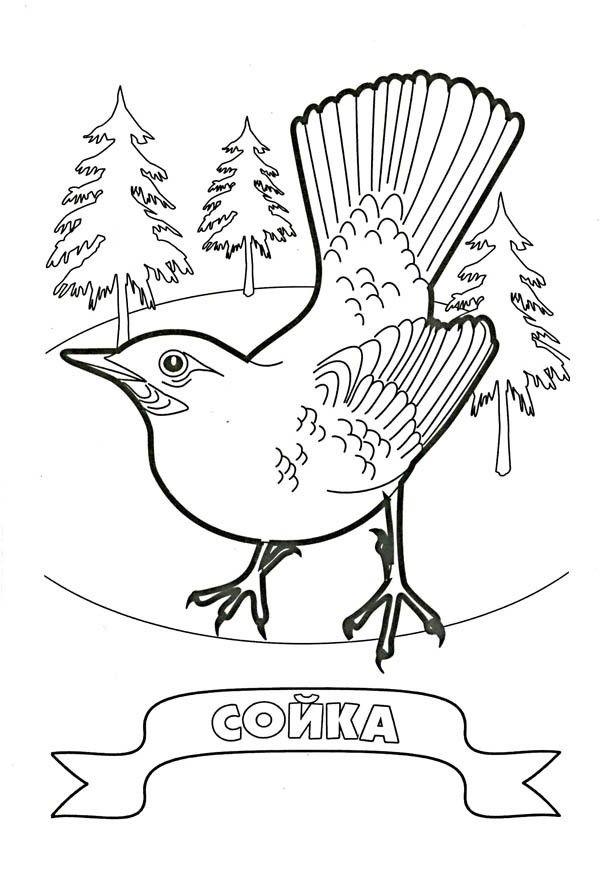 Раскраска Сойка — Край друзей | Раскраски, Лесные животные ...
