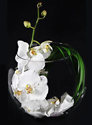 One Perfect Stem Of White Phalaenopsis Orchid Curled In A Large Rose Bowl With One Feathery St Ikebana Flower Arrangement Flower Arrangements Cymbidium Orchids