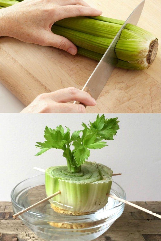12 Best Veggies Herbs To Regrow From Kitchen Scraps Regrow Vegetables Food Garden Growing Vegetables