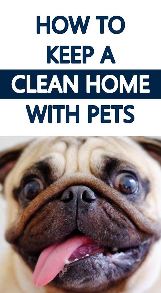 How To Keep A Clean Home With Pets Dog Hair Pet Hair Removal Pet Cleaning