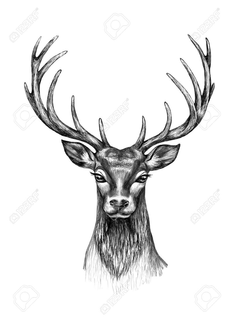 Hand Drawn Deer Head Isolated On White Background Monochrome Non Realistic Deer Head With Big Branched Horns T Shirt Design Tattoo Art Stock Photo A Dovme