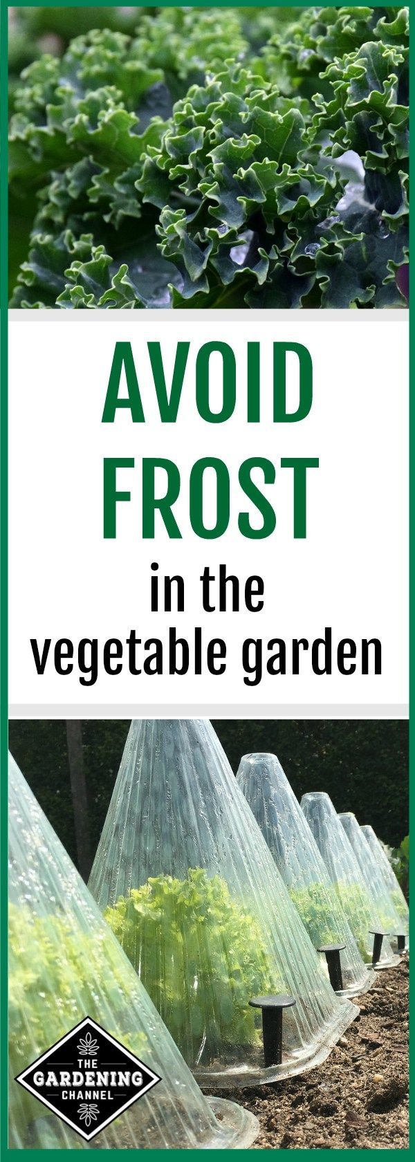 Learn How To Avoid Frost In The Garden With Frost Tolerant 400 x 300
