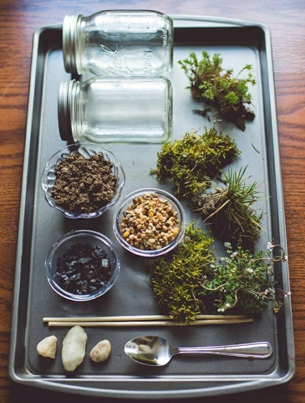 Photo of How do I build a terrarium? – Plants and matching glass jars