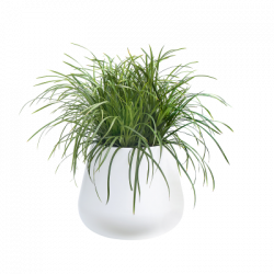 Pot Plant Png Elho Our Collection Gallery Clipart Royalty Free Plants Plastic Plant Pots Potted Plants