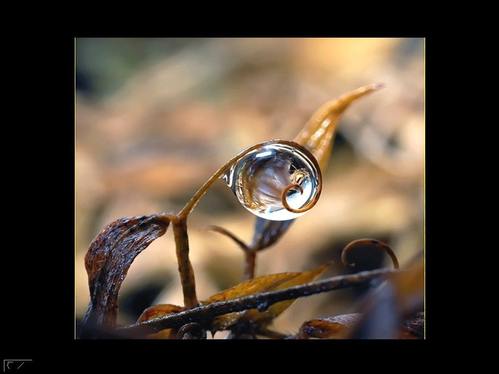 The beauty of rain drops