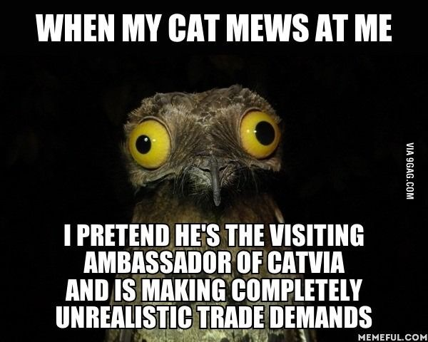 Yeah, we all talk to our cats when they meow. The weirdness bar is a little higher.